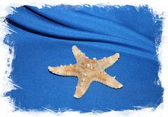 Декоративная морская звезда