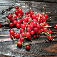 Смородина красная домашняя (1 кг)