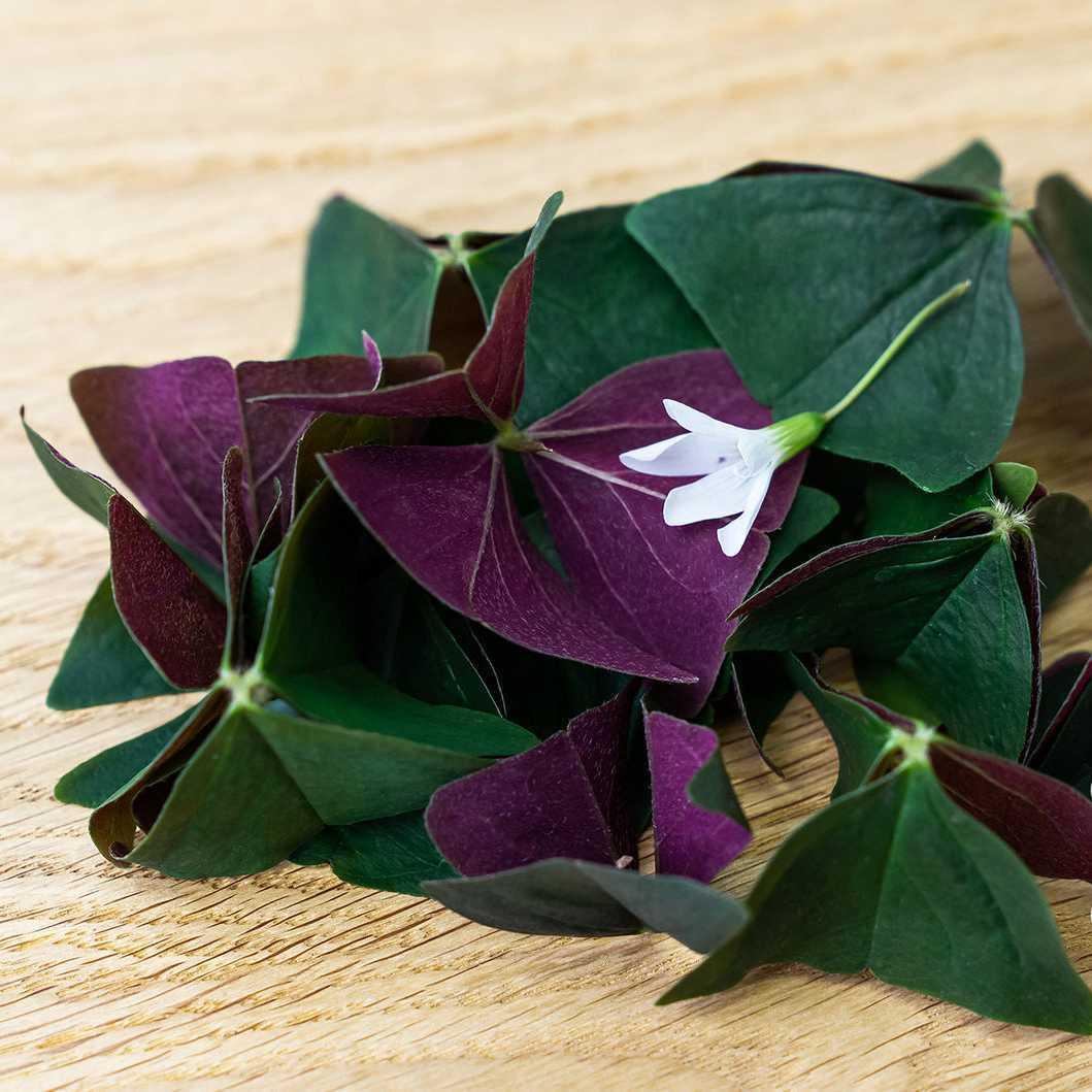 Фотография Кислица (листья и цветы) в срезе / 10 гр купить в магазине Афлора