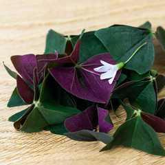Кислица (листья и цветы) в срезе / 10 гр