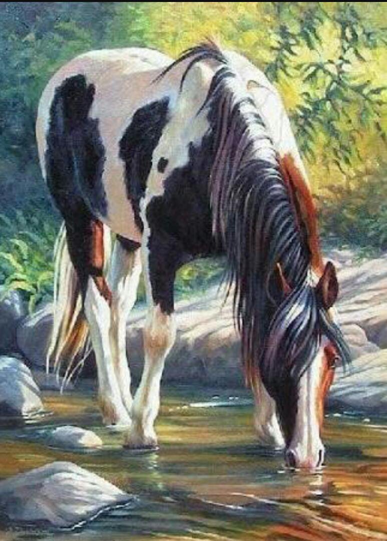 Картина раскраска по номерам 30x40 Черно-белая лошадь на ...