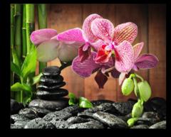 """Постер """"Орхидея"""""""