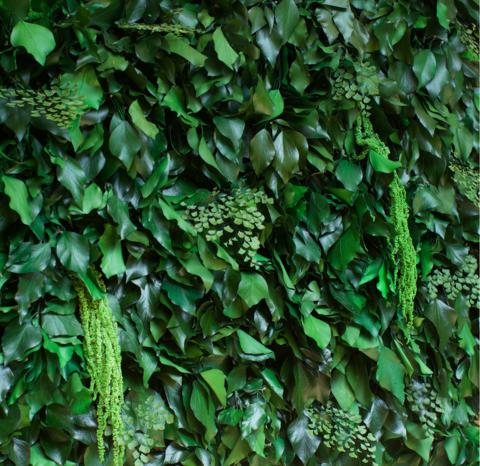 Готовая панель из стабилизированных растений
