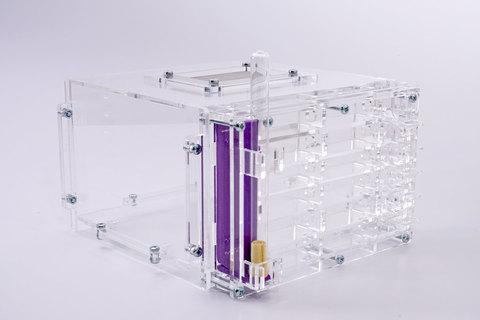 Crystal L + Camponotus parius