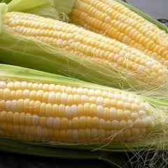 Кокани F1 семена кукурузы, (Clause / Клос)