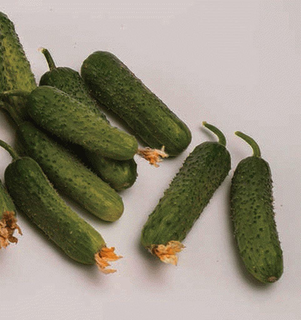 купить семена огурца сатина