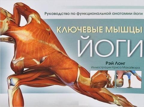 Фото Ключевые мышцы йоги