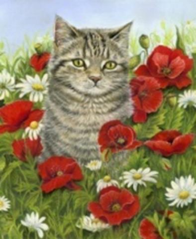 Картина раскраска по номерам 30x40 Кошка в поле (арт ...