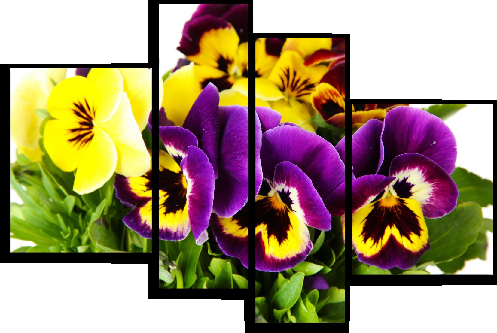 """Цветы Модульная картина """"Фиалка садовая"""" М713.png"""