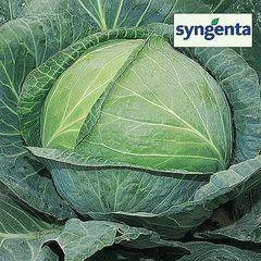 Агрессор F1 семена капусты белокочанной, (Syng.)