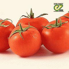 Айваз 331 F1 семена томата детерм.., (Enza Zaden / Энза Заден)