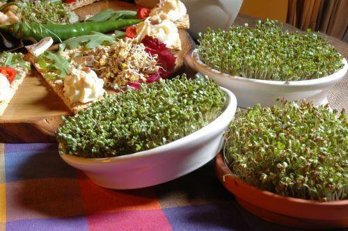 Проращиватель Eschenfelder для семян микрозелени, 12 см синий