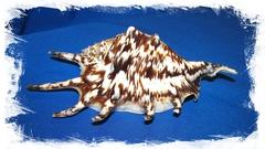Ламбис Тигровый 15 см