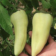 Аккорд А1 семена перца сладкого, (Hazera / Хазера)