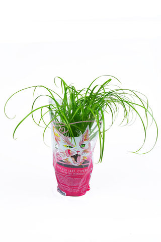 Травинка Витаминка Осока для кошек (Циперус)