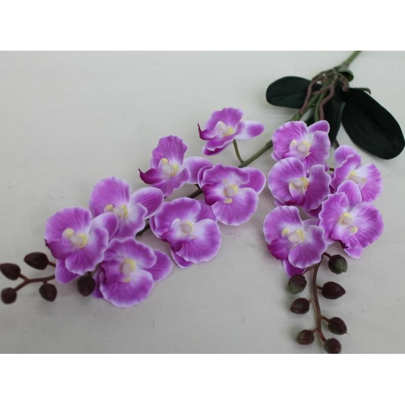 Ветка орхидеи двойная с корешками и листиками, 50 см.