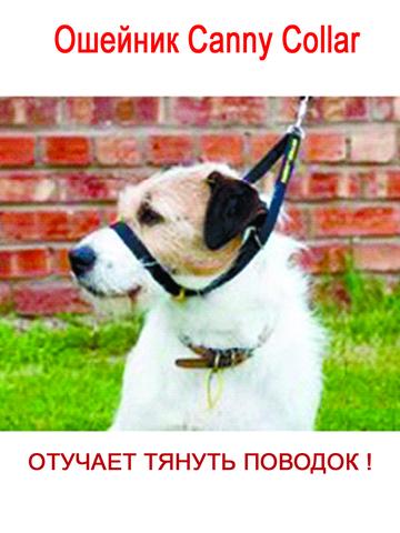 Ошейник Canny Collar- сдерживающий тянущую собаку, размер 4 (38CM - 43CM) , цвет красный