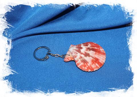 Брелок для ключей с ракушкой Цветного морского гребешка
