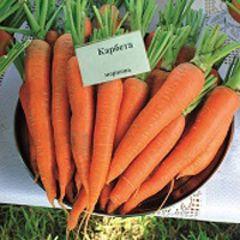 Карбета F1 семена моркови, (Seminis / Семинис)