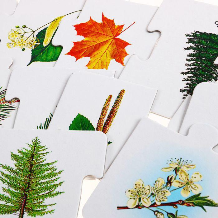 дидактические карточки листья