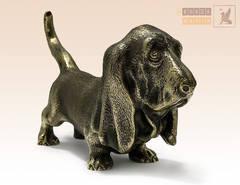 Собака Бассет большой