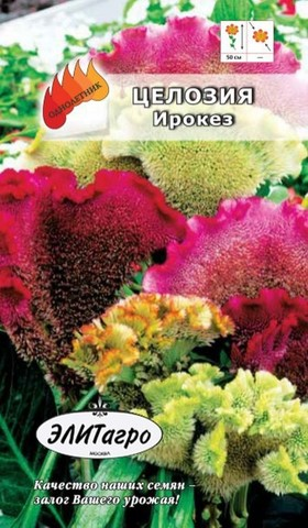 Семена Цветы Целозия Ирокез