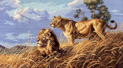 DIMENSIONS Африканские львы (African Lions)