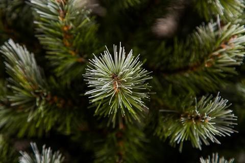 Искусственная елка Женева 60 см в мешочке заснеженная