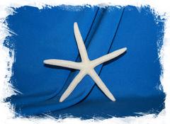 Натуральная морская звезда Фигнер
