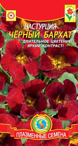 Семена Цветы Настурция Черный бархат