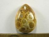 Кабошон коралла окаменелого, капля, 20x15x6 мм (3)