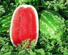 Мелания F1 семена арбуза, (Seminis / Семинис)