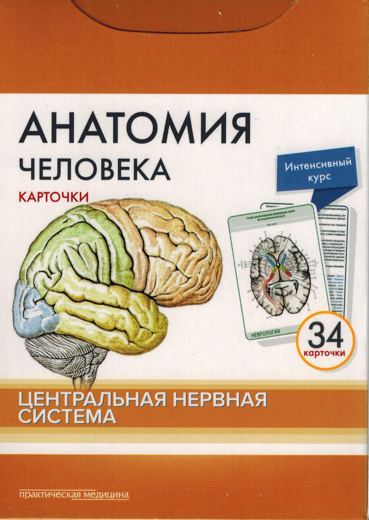 Каталог Анатомия человека: КАРТОЧКИ (34 шт). Центральная нервная система kart.jpg