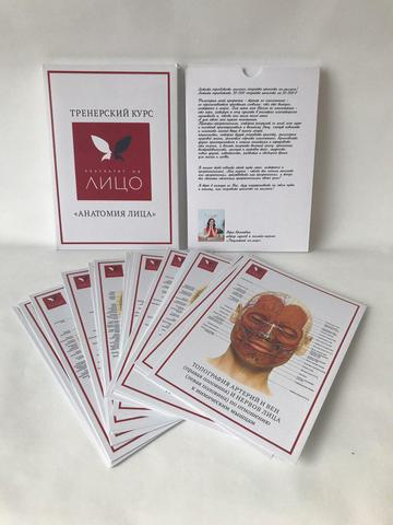 Анатомия лица (карточки)
