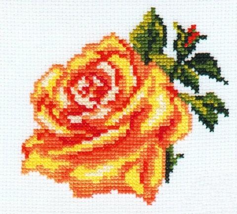 0-41 Роза
