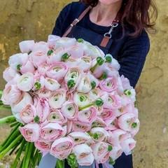 Букет из ранункулюсов 101 шт. нежно-розовых ПРЕМИУМ
