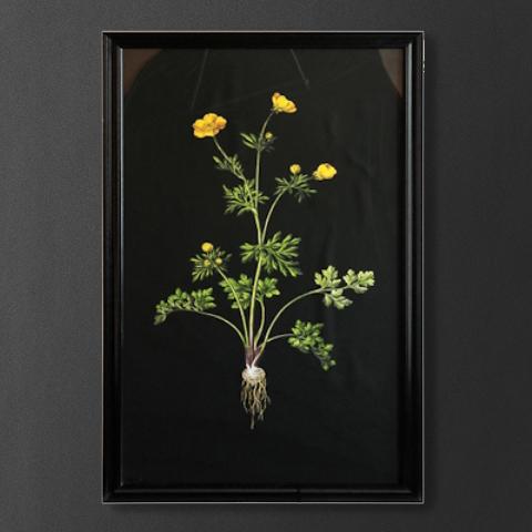 Постер Roomers Желтый цветок на черном