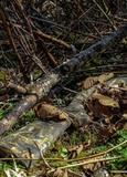 Камуфляжная лента McNett Break Up - тёмный лес