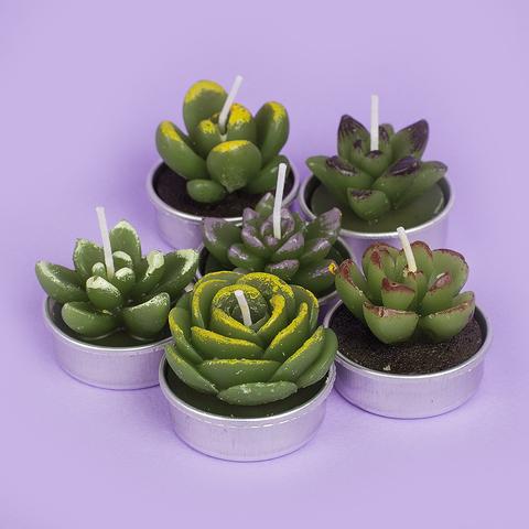 Набор свечей Succulent 2