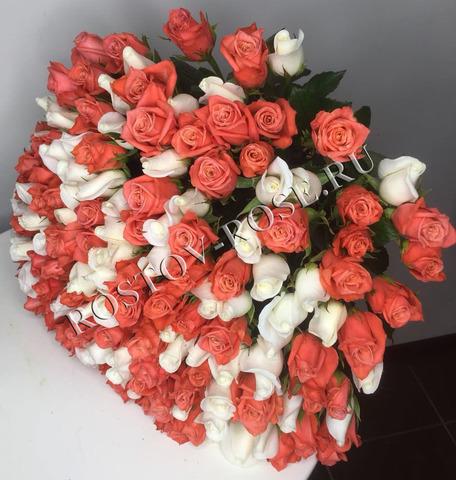 Букет 21 роза кораллово-белый микс