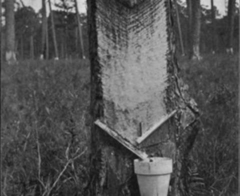 Живица кедровая 100мл