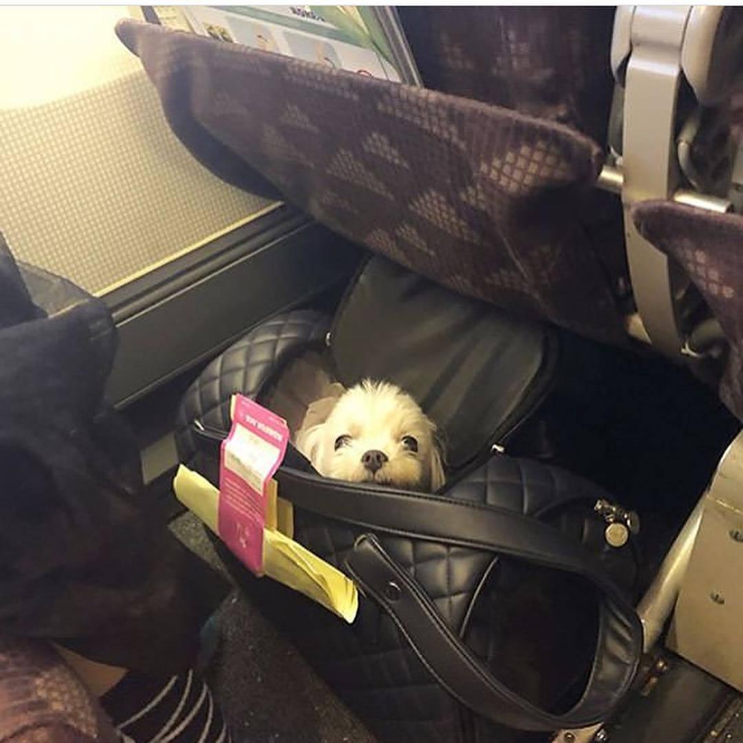 фото сумки переноски для собак в самолете