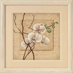 DIMENSIONS Восточные орхидеи