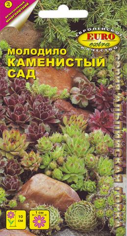 Семена Молодило Каменистый сад б/п, Мнг