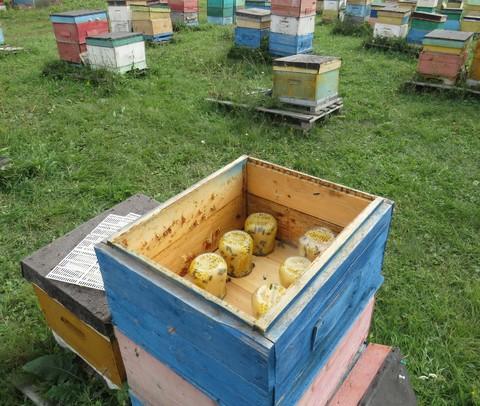 Сотовый мёд 0,6 кг в стеклянной банке
