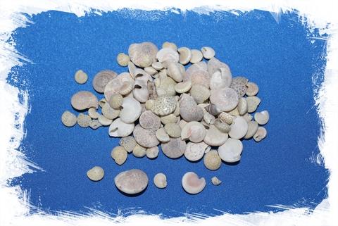 Умбониум Гуаменсис