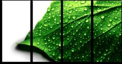 """Модульная картина """"Мокрый лист"""""""