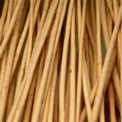 Лоза ивовая пурпурная для плетения корзин 150-170см