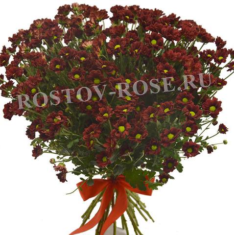 Красные хризантемы Сантини