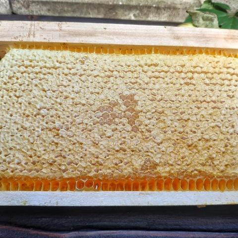 Фотография Мёд в сотах рамка, 1.6 кг купить в магазине Афлора
